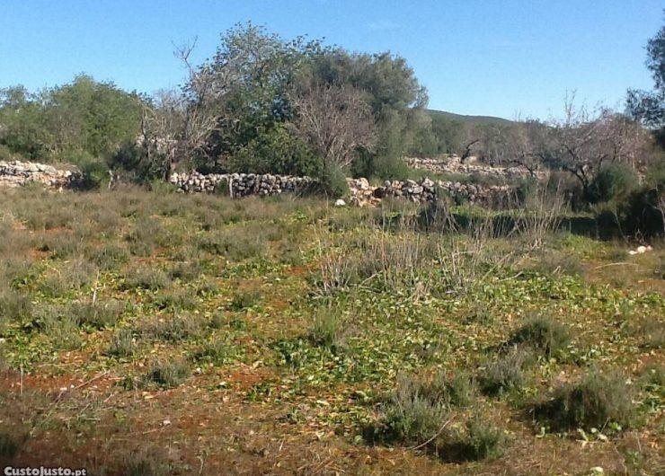 6153040817-terreno-com-ruina.jpg
